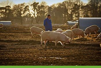 Pig Farmer at Wayland Farms